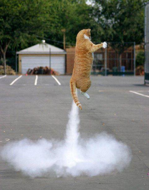 NASA Cat