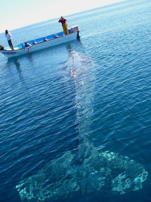 13-11-30-Baleine