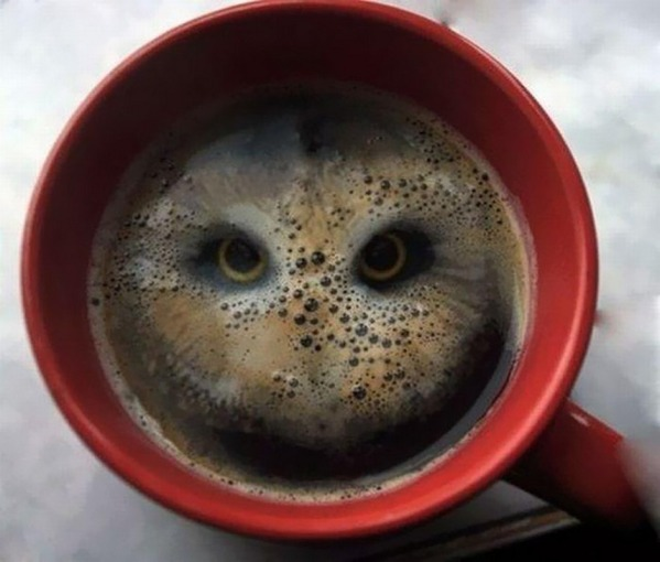 coffee-hibou