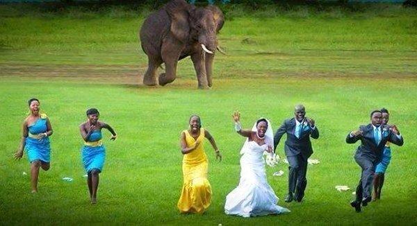 13-12-04-Elephant