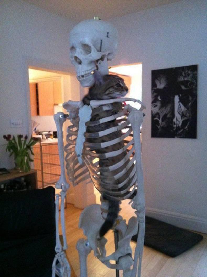 13-12-04-SqueletteChat