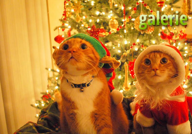 animaux Noel