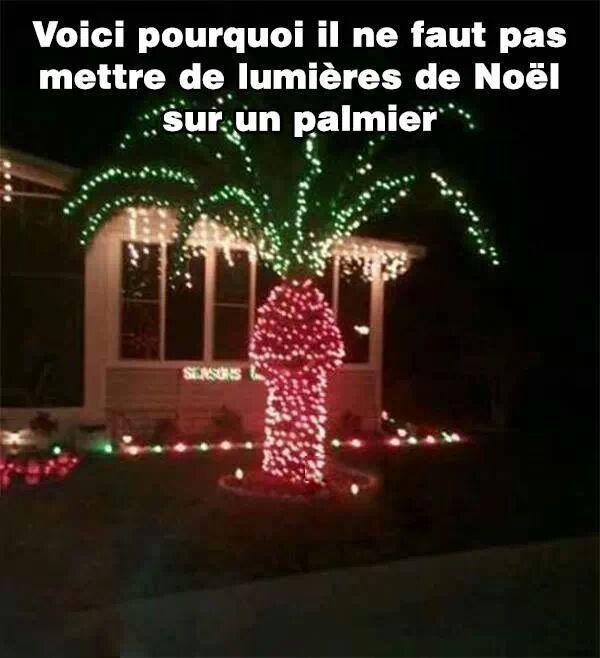 Lumiere-Noel-Palmier