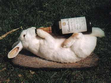140102-RabbitDrink
