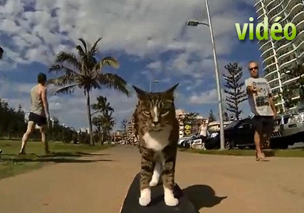 Didga : le chat skateur
