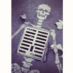 Squelette