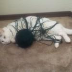 Un chat trop joueur