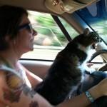 Le chat concentré et a fond