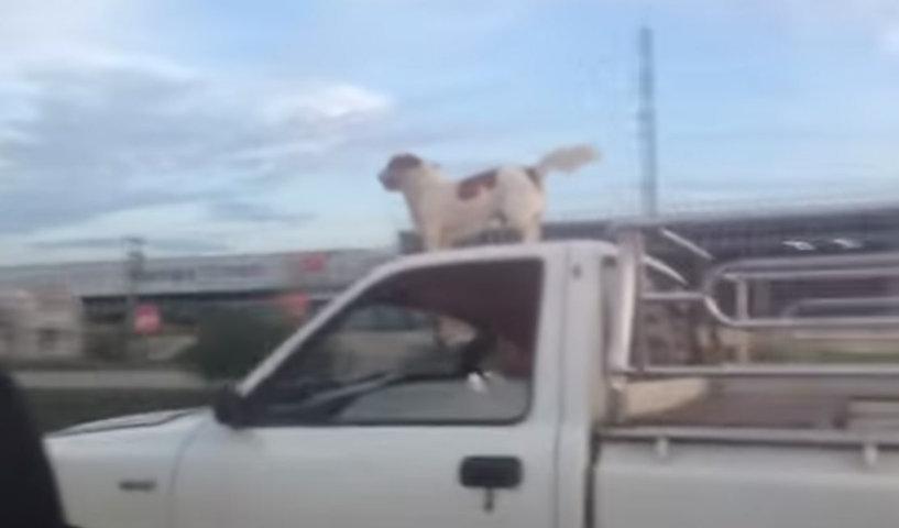 chien intrépide
