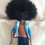 afro chien