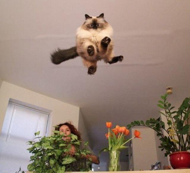 Hello Kitty volante