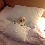 Aller bonne nuit tout le monde