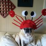 Capitaine Crabs