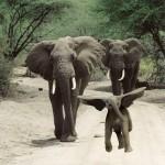 Dumbo enfant avant d'être connu