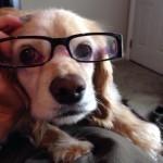 En mode lunette de vue