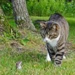 Alors la souris on se balade ?