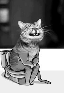 Une Catstro ?