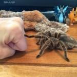 Spider check