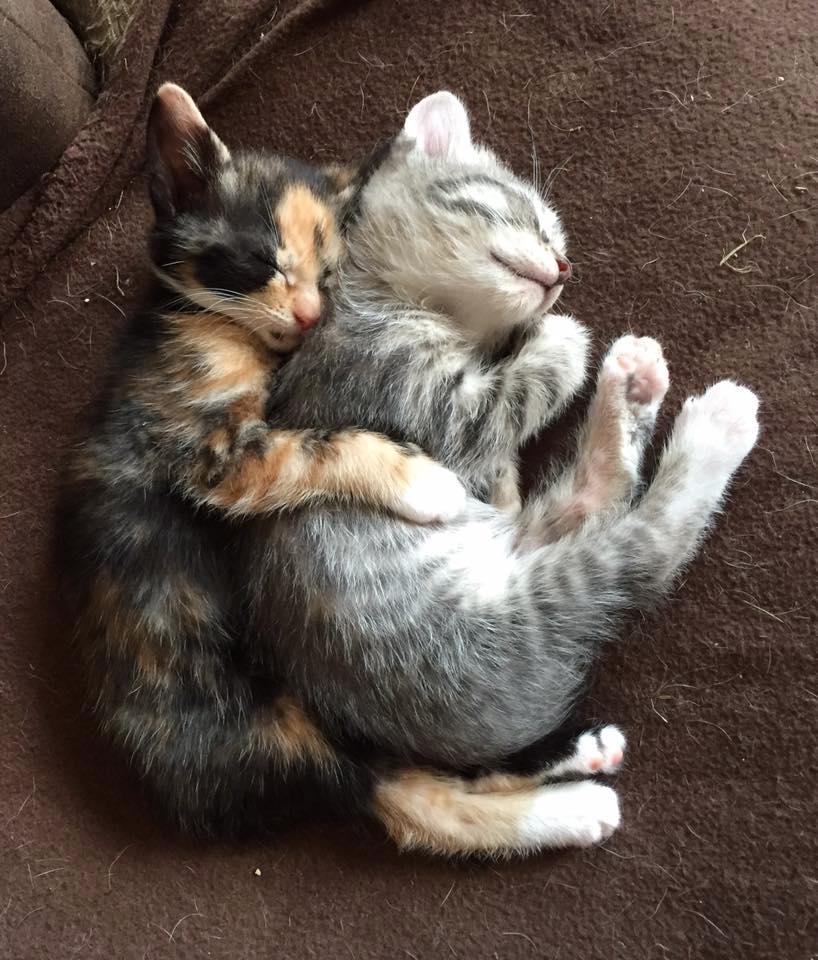 chat amoureux qui se font un calin