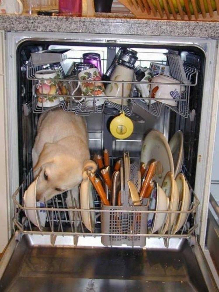 chien dans le lave vaisselle qui leche une assiette afunnymoment. Black Bedroom Furniture Sets. Home Design Ideas