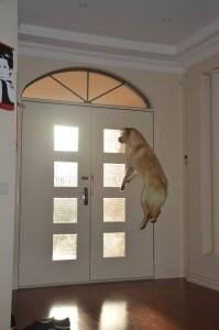 chien à la porte